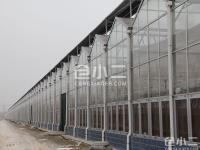 济宁兖州高5米温室14000平出租,可分割面积