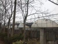 武汉青山区300亩苗圃出租